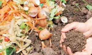 وضعیت مبارزه با آفات درون گلخانـه ها نگران کننده هست - خانـه کشاورز mimplus.ir