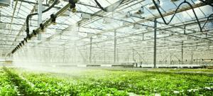 نیاز آبی محصول در گلخانه