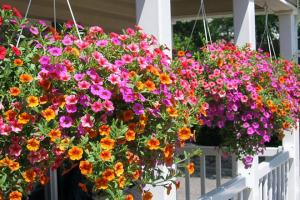 پرورش گل و گیاه در خانه